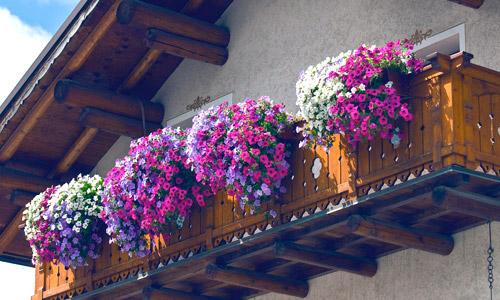 Jardinería en balcones en Granada Jardín