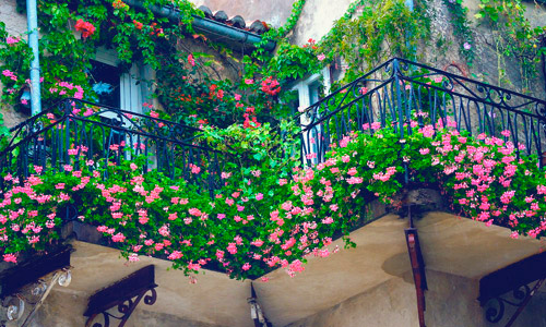 Jardinería en balcones en Granada | Granada Jardín
