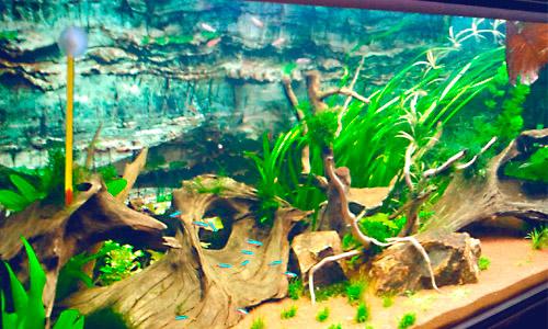 Montaje de acuarios en Granada Jardín