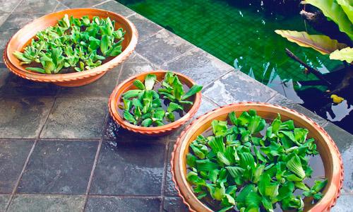 Mantenimiento de piscinas en Granada | Granada Jardín